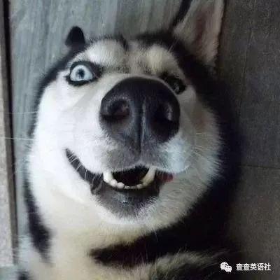 """如何用高級又委婉地表達""""你很蠢""""?  (雙語)"""