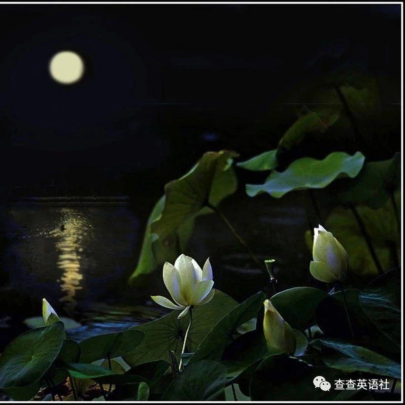 中秋節祝福語   (中英雙語)